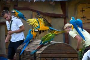 Tiershow mit Papageien