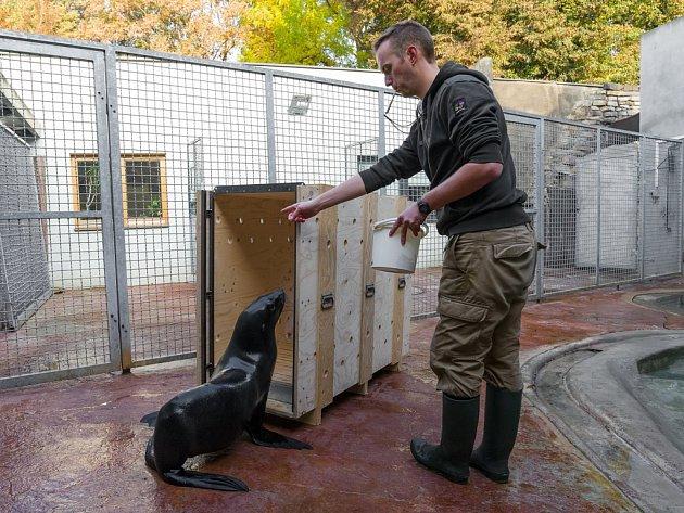 Zoo Rostock stellt Seebärin Wendy vor