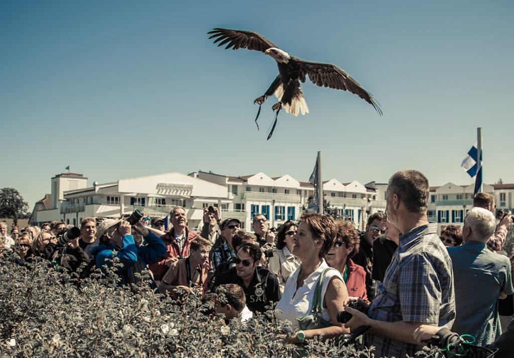 spektakuläre Greifvogelshow Hellenthal