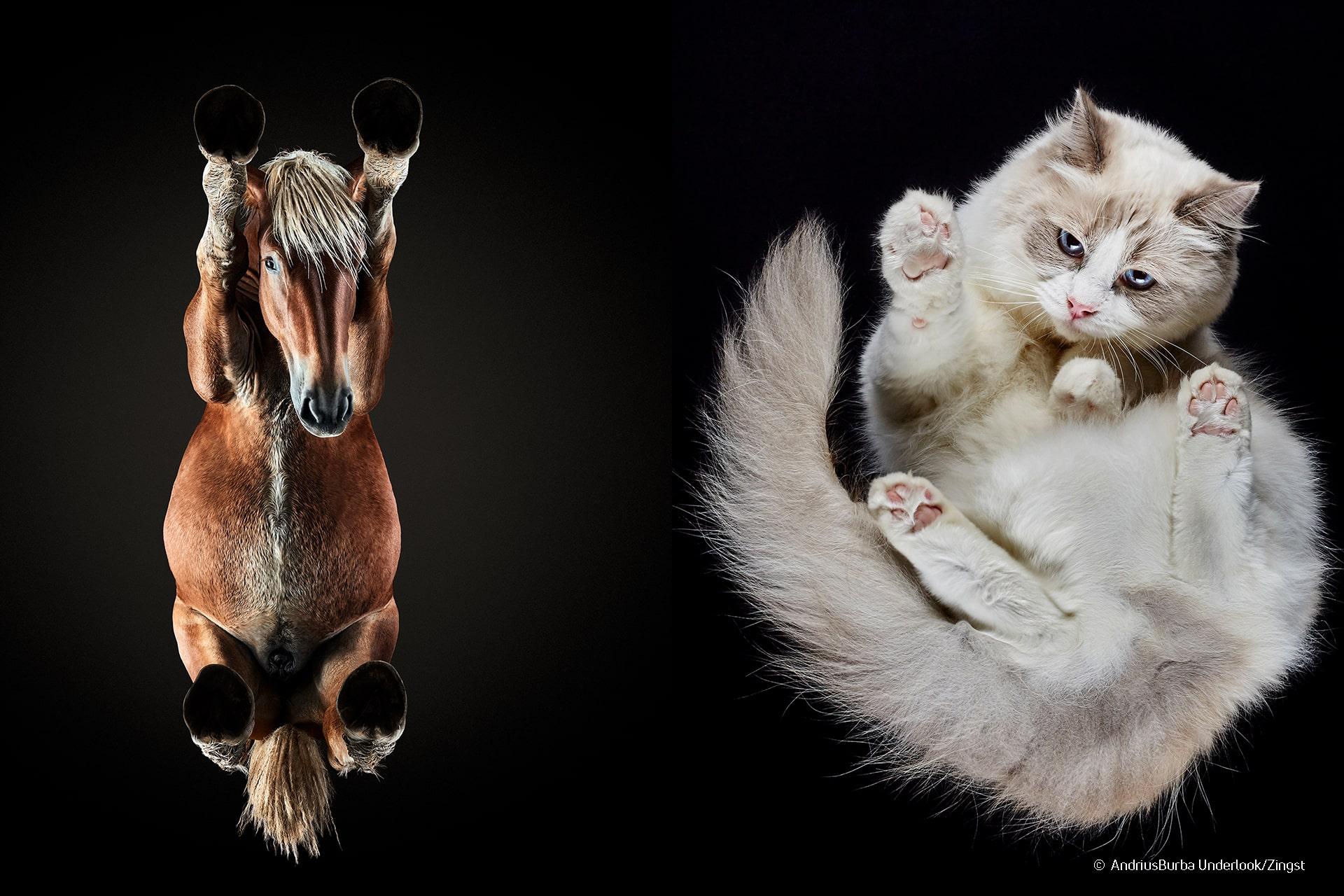 Underlook Andrius Burba Tierfotografie