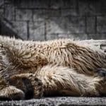 Baer_Zoo_Rostock_1