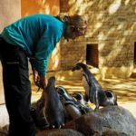 Fütterung der Pinguine im Zoo Rostock