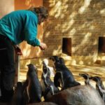Hungrige Pinguine