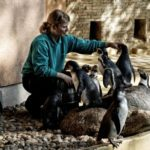 Tierpflegerin mit Humboldtpinguine