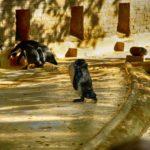 Humboldtpinguine im Zoo Rostock