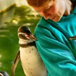 Tierpfleger mit Humboldtpinguin im Zoo Rostock 3