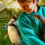 Tierpfleger mit Humboldtpinguin im Zoo Rostock 2