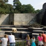 Bärenburg im Zoo Rostock heute