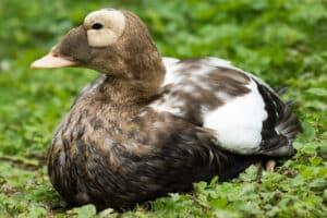 Stallpflicht im Zoo Rostock aufgehoben
