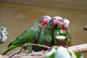 Vögel dürfen wieder in die Zoo Gehege